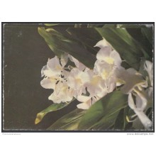 1991-EP-38 CUBA 1991. Ed.149i. MOTHER DAY SPECIAL DELIVERY. POSTAL STATIONERY. ERROR DE CORTE. FLORES. FLOWERS. UNUSED.