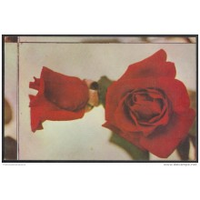 1975-EP-7 CUBA 1981. Ed.118c. MOTHER DAY SPECIAL DELIVERY. POSTAL STATIONERY. ROSAS. ROSE. FLOWERS. FLORES. ERROR DE COR