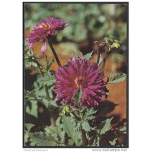 1991-EP-41 CUBA 1991. Ed.149g. MOTHER DAY SPECIAL DELIVERY. POSTAL STATIONERY. FLORES. FLOWERS. USED.